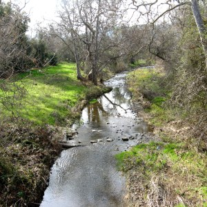 Winter ending on Calero Creek