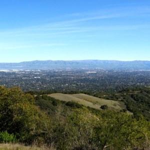 Silicon Valleys Sea of Trees