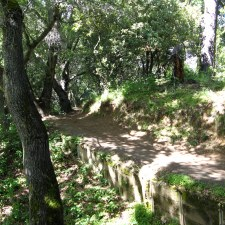 Cora Older Trail
