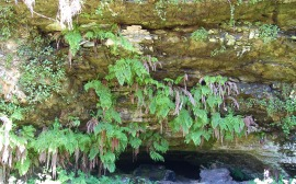 Fern Grotto Cave/Wilde Ranch SP/ Hike No 12