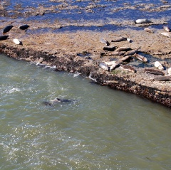 Locals Sunbathing at Wilder Ranch State Park, Santa Cruz, CA