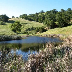 Hike No. 11 - Calero County Park - Los Cerritos/Pena/Figueroa Trails