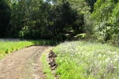 Figueroa Trail, Calero Park