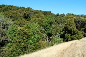 Hike down into the Creek area Monte Bello OSP Hike No 17