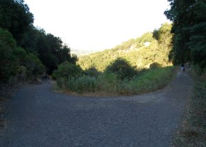 Bikers, families, and dogs all use the lower trails!  Heinz OSP  Hike No 18