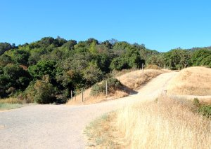 Coyote / PG&E Trail transition from grasslands to coast live oak hike 19
