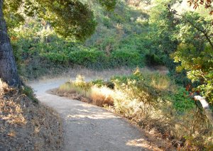 Coyote trail winds down into a Oak covered canyon  Hike 19