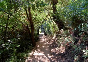 Farm Bypass Trail very shady!  Hike 19