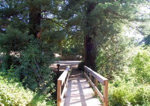 Farm Bypass Trail bridge connection to Lower Meadow Trail Hike 19