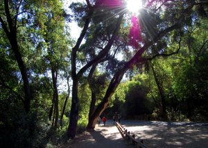 Hike No. 19 - Rancho San Antonio OSP - Lower Trails