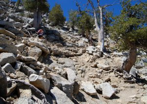 """On The Switchbacks"" Devil's Slide Trail, San Jacinto Wilderness Area"