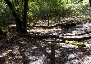 San Andreas Fault, Los Trancos OSP, Hike 28