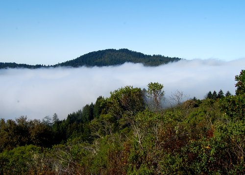 Hiking in the Clouds Purisima Creek Redwoods Hike No 22
