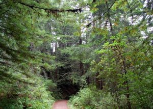 Redwood Cathedral Hike No 22