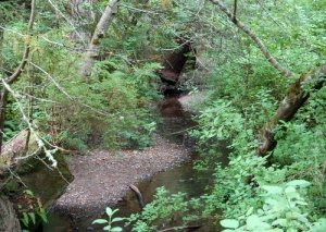 Purisima Creek Hike No 22
