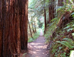 Hiking through the Redwoods Hike no 22