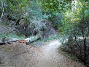 Ancient Oaks Trail Hike No 31