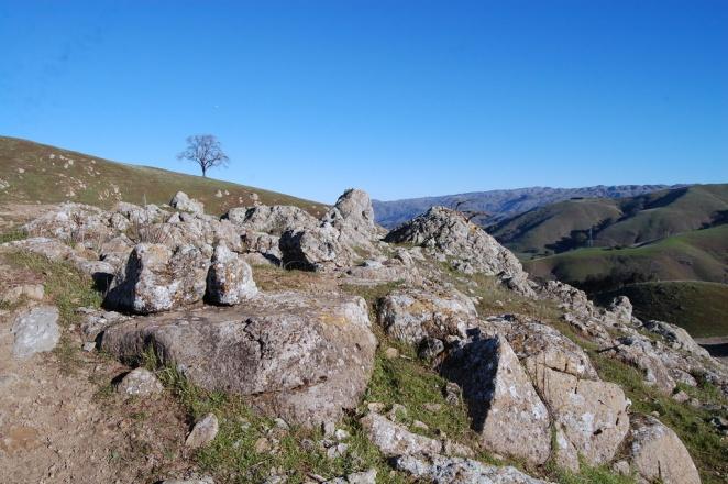 Rocks and a Lone Oak